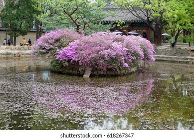 Short trip of Korea Seoul in Spring