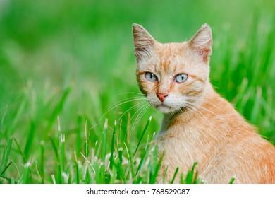 Imágenes Fotos De Stock Y Vectores Sobre Cat Wallpaper
