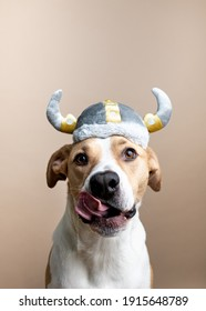 Shorthaired Mixed Breed Dog Wearing Viking Hat