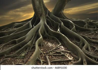 Shot of a Banyan Tree in Florida