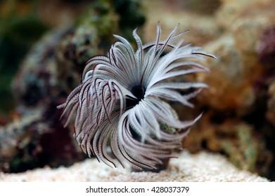 A shot of a beautiful marine bristle worm