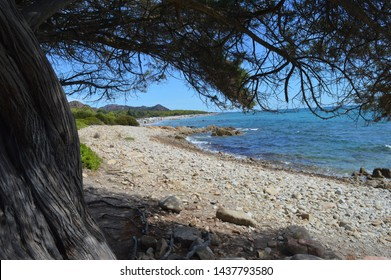 A shot of a beautiful Sardinian beach, framed by a secular tree.  This landscape presents a little cove with crystal clear water and thin sand. A perfect place for an adventure during the holidays.