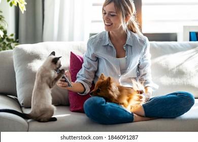 家のリビングルームのソファに座った携帯電話を使いながら、かわいい犬と猫と遊ぶ美しい若い女性の写真。