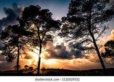 A shot of the Carmel forest with sunset background, Carmel forest, Israel