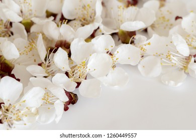 The shot of cherry blossoms on a light gray background