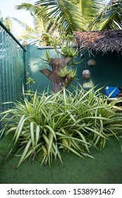 shot of a cozy corner of a garden with a green fence, small aloe vera plants on a tree trunk, a yucca flamentosa (Golden Sword), coconut lamps hanging from a dry palm leaves thatched roof.