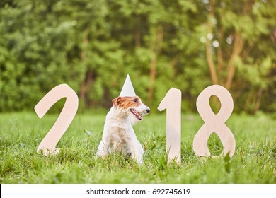 Shot of a cute wire fox terrier wearing party hat sitting near numbers forming 2018 for Chinese new year of the dog greeting card concept.