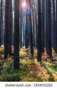 A shot of the forest in late summer, background