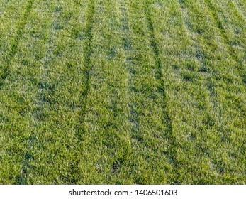 A shot of freshly mowed garden lawn