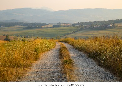 Shot of a gravel path in the Tuscan countryside in Italy, shot at summer in the golden hour with the sun shining from the right
