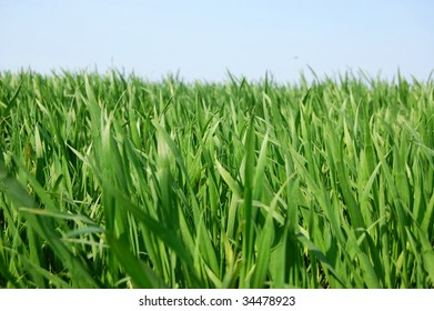 a shot of green grass can be used as texture