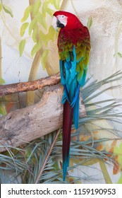 Shot of Green-Winged macaw in nature surrounding