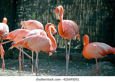 A shot of a group of pink flamingos