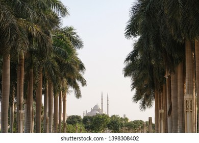 Shot of the long trees and Cairo citadel in the background. Citadel of Saladin is one of the greatest monuments in Egypt.