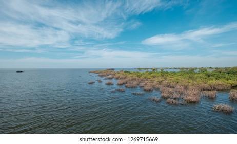 Shot of the mangrove vegetation at the deeper end of Tonle Sap Lake during the start of dry season (November)