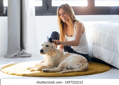Shot of pretty young woman brushing her dog's hair while sitting on the floor at home.