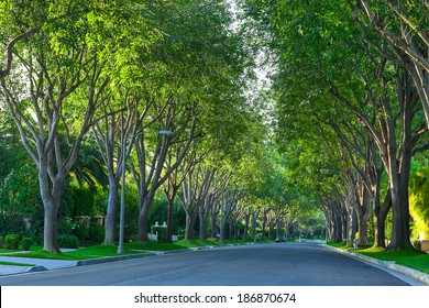 A shot of quiet Beverly Hills Road