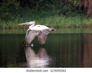 Shot at Ranganathittu bird sanctuary, Karnataka, India