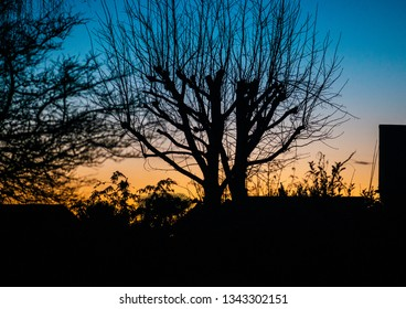 A shot of a silhouetted tree at sunset.