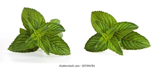 A shot of sprigs of a mentha (also known as mint)