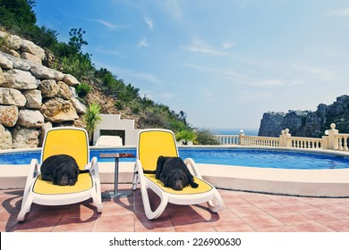Shot of Two Chocolate Labradors Relaxing by the Pool