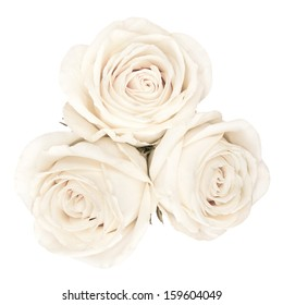 The up shot of white bright beautiful roses
