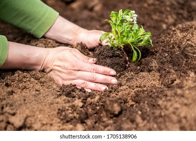 Shot of a woman holding a plant growing out of soil