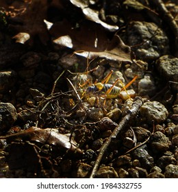 A shot of an yellow rare insect looking like an arachnid in an environment full of stones