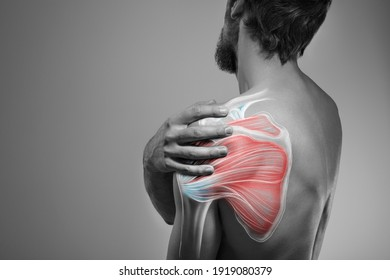 Shoulder muscle and nerve pain, man holding painful zone injured point, human body anatomy