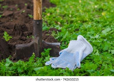A shovel and a farmer's working gloves with a green grass in front  and a dug up soil behind. Close-up shot.