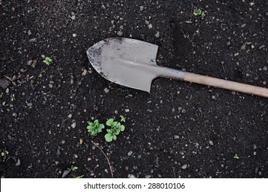 shovel on the ground, growing plants in the garden