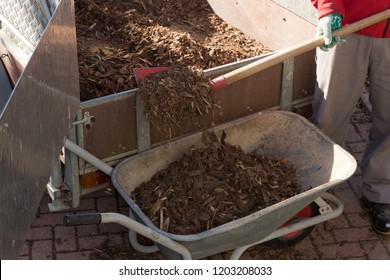 shoveling bark mulch in a wheelbarrow
