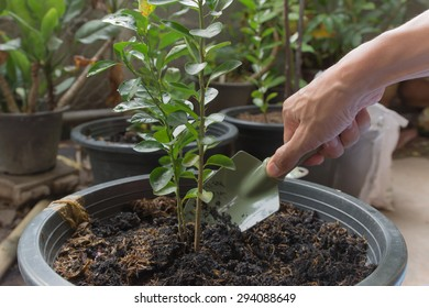 Shoveling soil, plants, trees provide a breath of air.