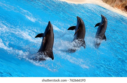 Show of dolphins in an amusement park