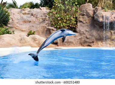 Show with dolphins in the pool (Tenerife)