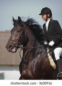 show jumper horse and show jumper