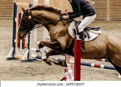 show jumping woman rider horse attempts in obstacle