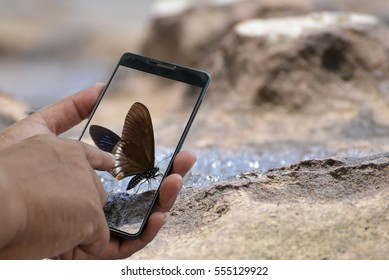 show male hand holding a phone with take photo butterflies.