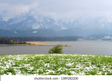 Show in May: Panorama view to lake Hopfen (German: Hopfensee) in spring, mountains in the background, Allgäu, Bavaria