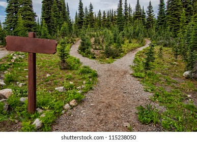 Showing a path splitting into two going into the woods with a blank signpost.