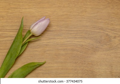 Showing some tulips laying on a wooden top .