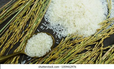 Showing Thai rice grain characteristics