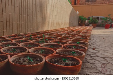 It shows the little effort of plantations because it is most important for living things as they improve the Eco-system.