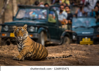 Showstopper A tiger cub at Ranthambore Tiger Reserve, India