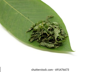 Shred Mitragyna speciosa leaf (kratom), plant in thailand, put on its leaf. Close up and isolated on white background