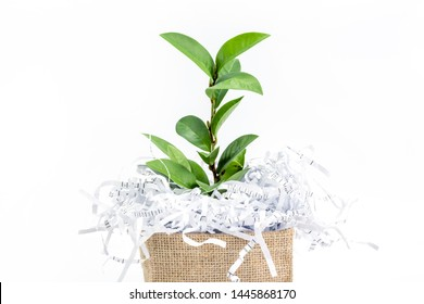 shredded paper waste with green leaf branch in burlap bag box on a white background , eco friendly paperless concept