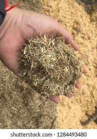 Shredded sugarcane leaf for the solid fuel using in boiler in the industrial