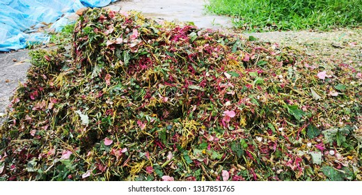 Shredding process of mulch may speed up its rate of decomposition. Flower and leaf mulch is a good organic material and can be recycled to improve soil structure.