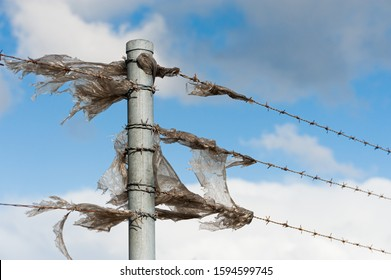 shreds of plastic sheeting stuck on barbed wire fence