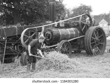 SHREWSBURY, SHROPSHIRE, UK. AUGUST 27 2018  Straw about to be loaded onto a threshing machine that is powered by a vintage traction engine.